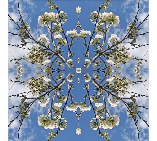 foulard cerisier en fleur